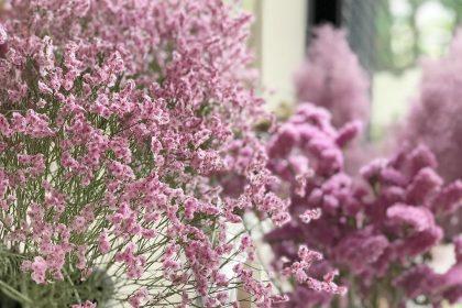 ワークショップ レッスン ピンクグラデ ドライフラワー リース スターチス リモリューム 花材 ピンク ボルドー グリーン フラワーアレンジメント